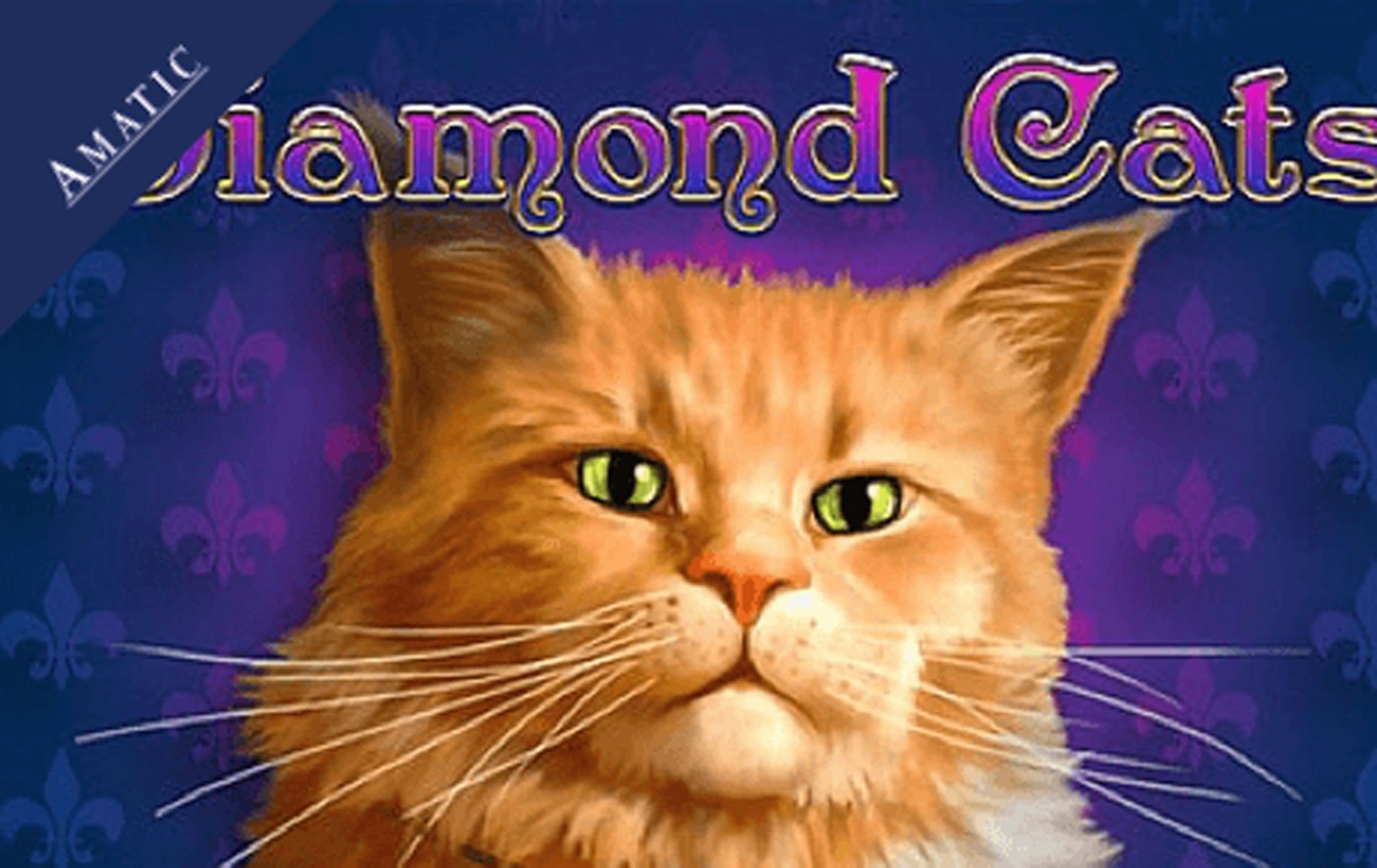 The Diamond Cats Online Slot Demo Game by Amatic Industries